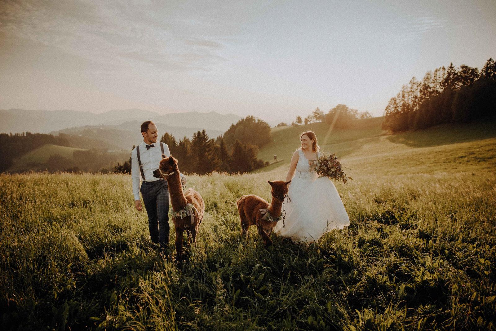 Aplpaca After Wedding Shooting by Christoph Weiermair